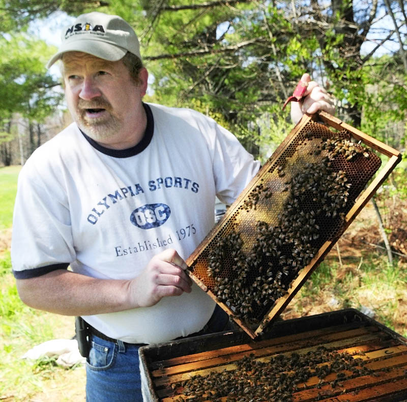 Roy Cronkhite checked one of his hives in Livermore Falls to make sure the queen bee had plenty of empty cells left in the wooden frames of the hives to deposit eggs. He pulled out three frames until he found the queen. �I see there�s plenty of cells over here, so she�s fine,� he said. �She has plenty of room.�