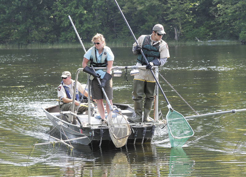 Maine 39 s wild brook trout faces threat from illegally for Maine fish wildlife
