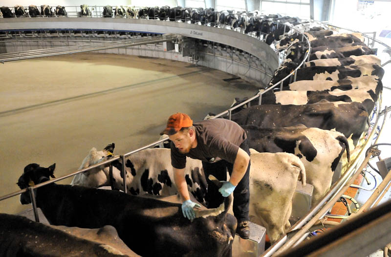 Connor Tulley, 17, of Fairfield, handles milking cows on the industrial revolving milking machine at Flood Brothers Farm on River Road in Clinton on Wednesday.