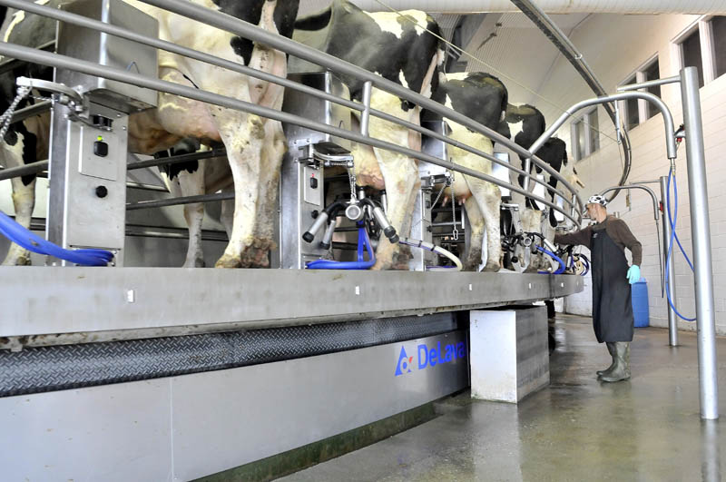 George Goodwin milks dairy cows on a revolving industrial milking machine at Flood Brothers Farm on River Road in Clinton on Wednesday.