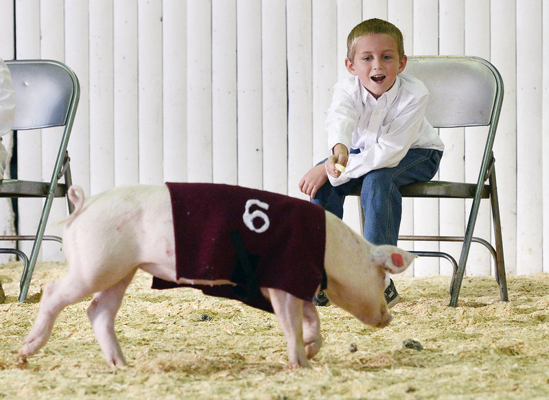 Luke Goodwin, 8, of Gorham calls Perry, his entry, during the pig races at the Cumberland Fairgrounds on Sunday. The fair continues through Saturday, with agricultural exhibits, harness racing and more.