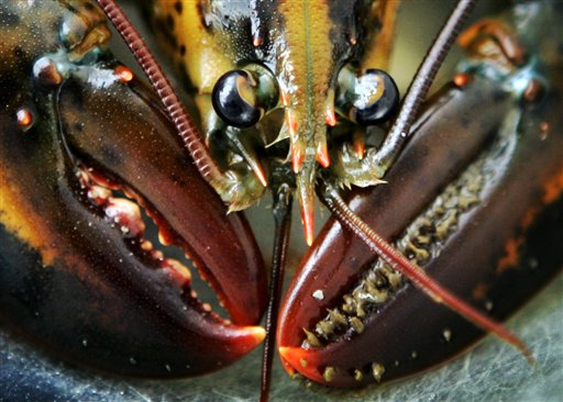 Researchers have found growth rings in the eyestalk of lobsters, crabs and shrimp. In lobsters and crabs, the rings are also found in teeth-like structures in their stomachs used to grind up food.