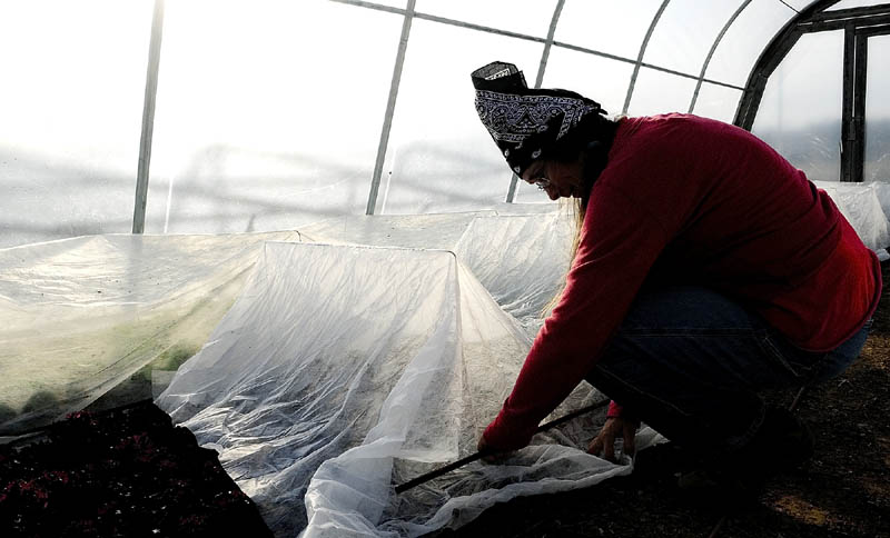 Mary West puts a row cover over plants growing inside a hoop house on Thursday afternoon at 3 Level Farm in Vassalboro. The double layer of protection should keep the greens and other plants alive over the winter, she said.