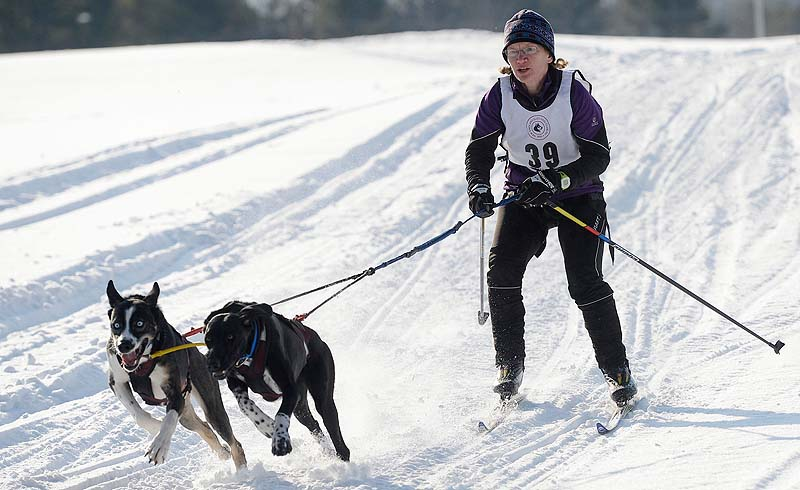 Kelley McGrath of Wonalancet village in Tamworth, N.H., competes in the two-dog skijoring race sponsored by the New England Sled Dog Club at Sunset Ridge Golf Course in Westbrook on Sunday. The sled dog races were part of the Winter West Festival.