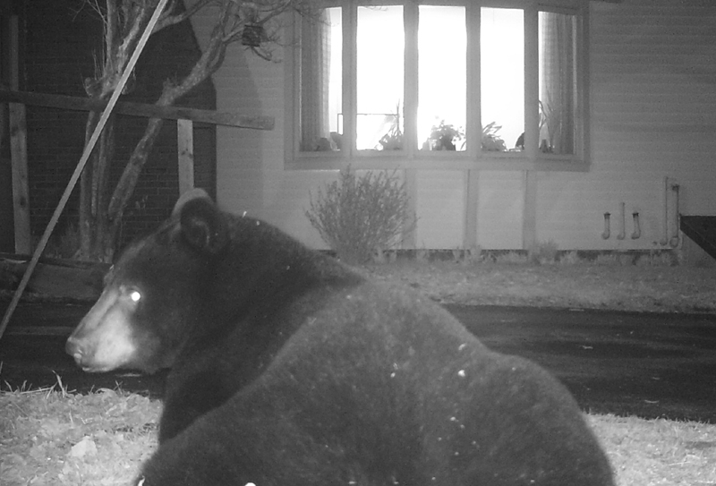 A bear is captured on camera recently outside the home of Priscilla Stevenson of Wayne.