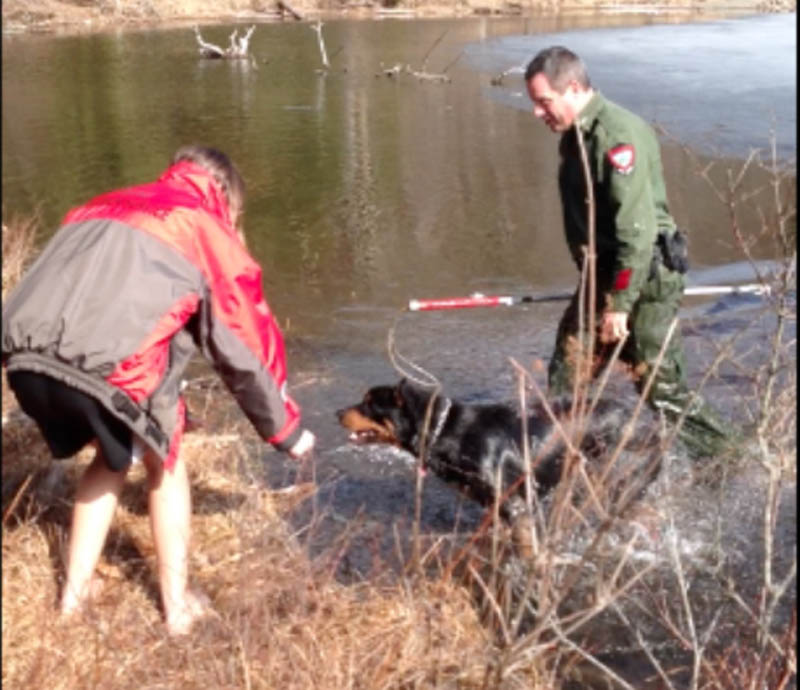 Game Warden Steve Allarie, right, wades out of Jamie's Pond after rescuing a dog off the ice on Friday in Hallowell.