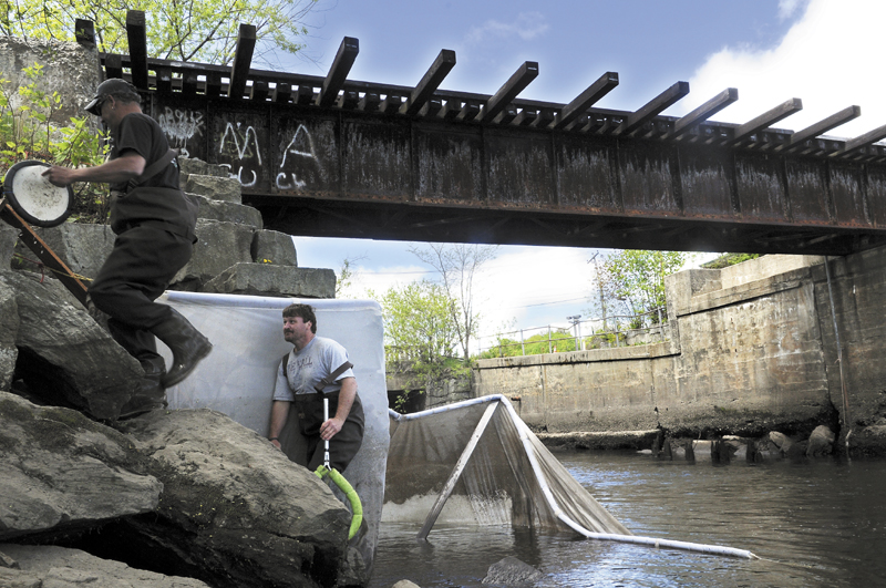 Elver fishermen climb up the embankment of the train trestle spanning Cobbossee Stream in Gardiner Tuesday. The City of Gardiner has been awarded a grant from the Environmental Protection Agency to search for contaminants in the stream.