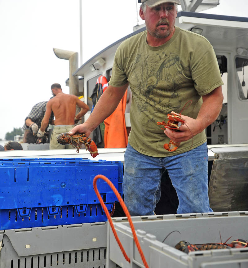 Jim Wotton, 44, weighs his catch on the pier at the Friendship Lobster Co-op in Friendship Harbor on July 29. After 12 hours of fishing, the crew unloads 800 pounds of lobster caught and crates them for transport to Canada for processing. Wotton has to send the lobster to a Canadian processing plant because it is the only one that can handle the high volume.