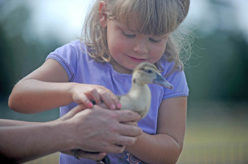 Paige Labbe, 5, of Rome, is handed a baby duckling from Shannon Salley, while inspecting the farm animals at the Harmony Free Fair today.