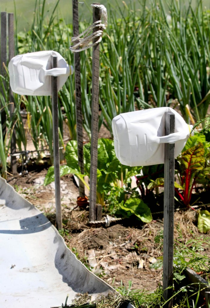 Milk jugs help visually impaired gardeners David Perry, of Waterville, and Deon Lyons, of Clinton, identify rows in a garden they have cultivated in Fairfield.