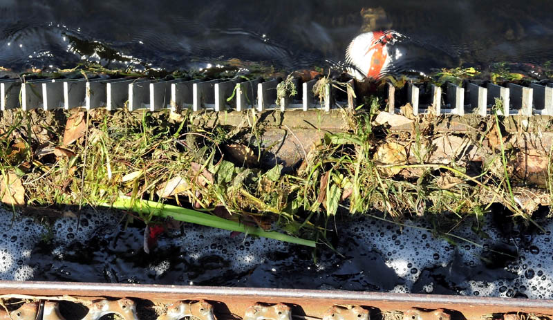 Debris including branches, plants and a toy ball plug the screen at the dam outlet of Messalonskee Lake in Oakland on Monday. Owners of the dam are asking the Town Council to allow them to remove a section of screen, which also prevents fish from migrating between Messalonskee stream and lake.