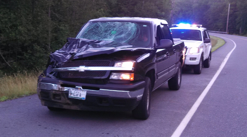 A pickup truck was destroyed in a collision Thursday on Route 4 in Sandy River Plantation. The accident was one of five moose-vehicle collisions last week in northern Franklin County.