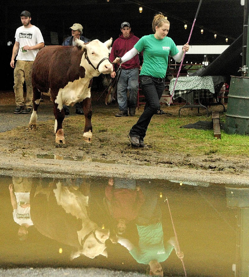 Brea McPherson, 16, of China, leads her steer named Champ toward the show ring for the 4-H Baby Beef Auction today at the Windsor Fair. The auction was the only event on the fair's final day to survive heavy rain. There were 12 market steers and three market lambs, raised by 4-H members, auctioned off at the event, according to Curtis Prine, the fair's livestock superintendent. Prine said that the 4-H members had to buy a young animal before the beginning of the year, raise, feed and get it ready to compete for a show Saturday evening. The animals were then sold at auction today.