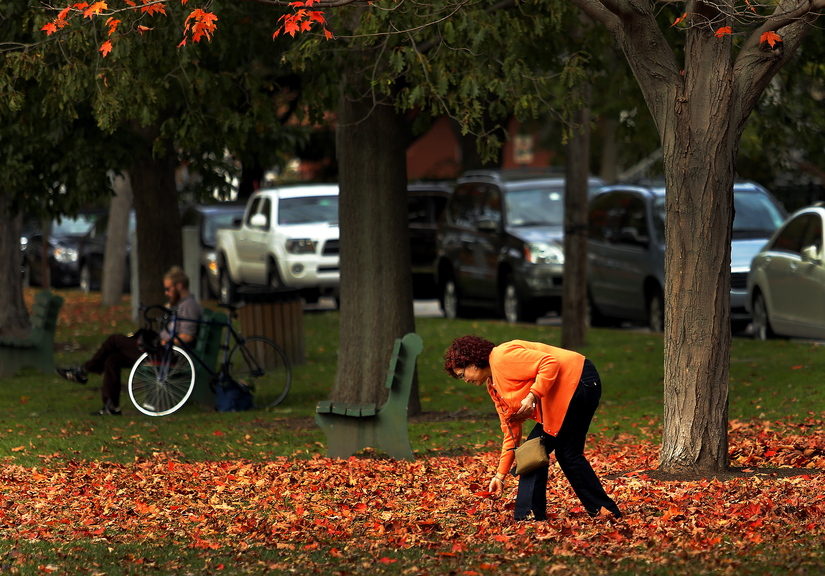 Ana Maese of Topsham adds a splash of color to the already vibrant scene at the Brunswick Town Commons on Thursday as she collects red leaves to send to her daughter in Texas. Leaf-peeping season is the second-busiest time for tourism in Maine.