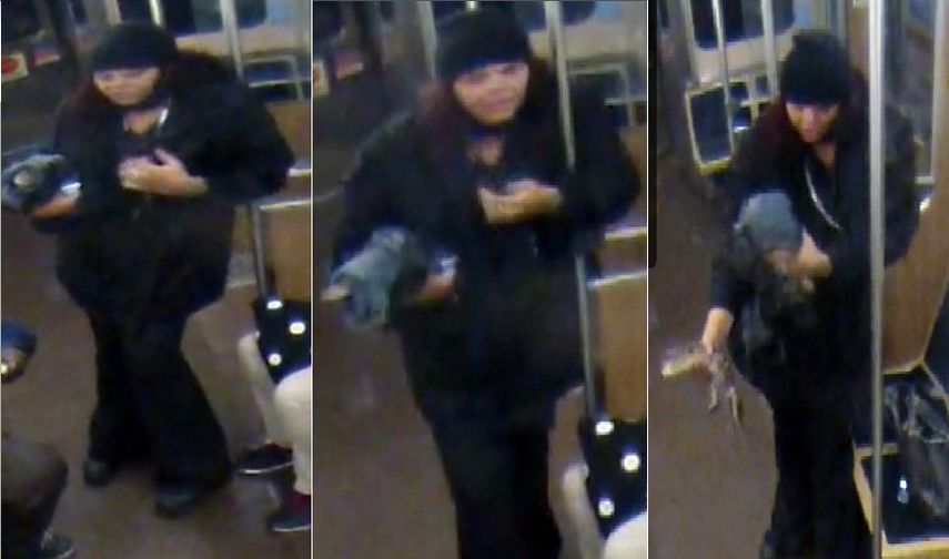 This combination of images from security footage provided by the Chicago Transit Authority shows the woman boarding a train just after 1 a.m. on Nov. 1, carrying the reptile under her arm.