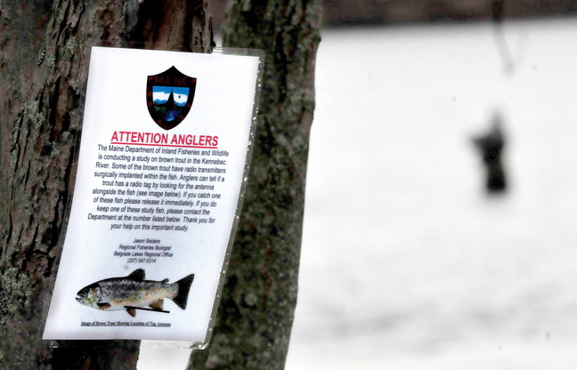 Staff photo by David Leaming SOMETHING IS FISHY: A sign posted below the Shawmut dam informs anglers that a study is underway for brown trout populations and urges fishermen to release tagged fish stocked by the Inland Fisheries and Wildlife department. A fisherman tries his luck downstream in the Kennebec River.
