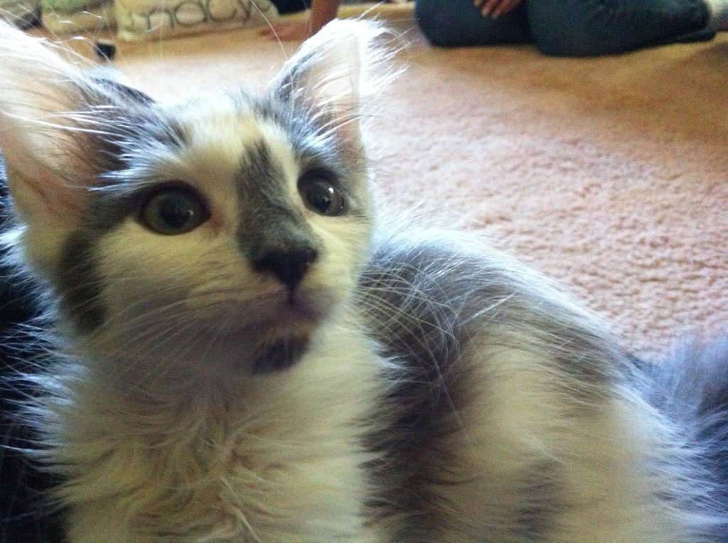 Miracle the kitten has a new home in Scarborough.