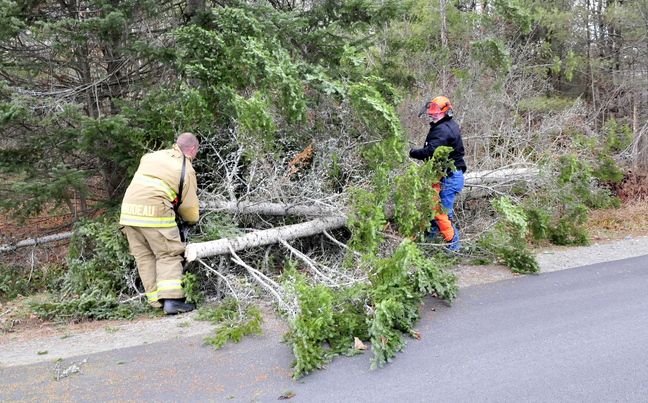 ROAD HAZARD: Oakland firefighter Anthony Thibodeau, left, and Capt. Dave Groder cut and move a tree that fell and blocked part of the East Pond Road in Oakland due to the strong winds on Sunday, Nov. 24, 2013. Groder said there were numerous reports of fallen trees and downed power lines in Belgrade and Somerset County.