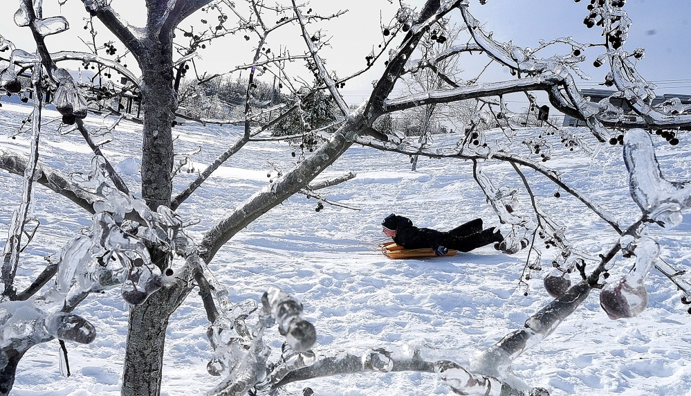 ICED OVER: Limbs — still iced over from last week's ice storm — frame Dayton Dinsmore as he sleds at Mill Park on Tuesday in Augusta. Besides the sledding hill, there are also two ice rinks in the city park on Northern Avenue at the base of Sand Hill.