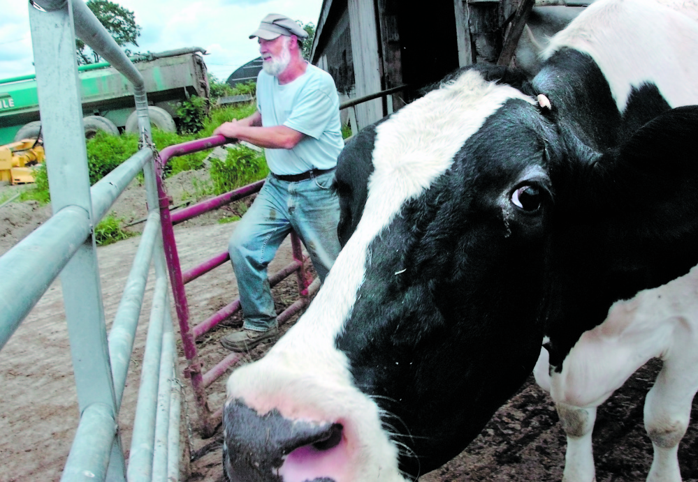 FARMER: Pittsfield Dairy farmer Walter Fletcher is one of the area farmers who have been helped by the Maine Farmland Trust, which raises money to keep farmland in the hands of farmers.