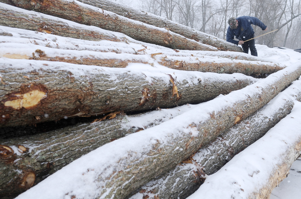CLEAN CUT: Kevin Lemar climbs over a pile of hemlock Thursday that he cut and delivered to a customer in Randolph. The Belfast logger used a scale ruler to measure the logs, which will be used for a construction project.