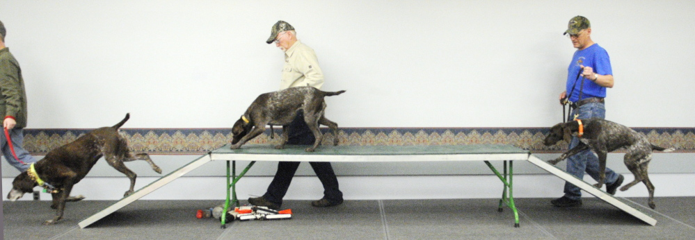 Members parade their dogs over a training table at the opening of the North American Versatile Hunting Dog Association demonstration Friday at the Maine Sportsman's Show at the Augusta Civic Center. (Photo by Joe Phelan/Staff Photographer)