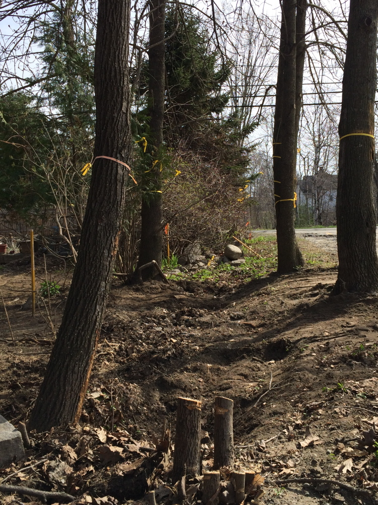 On the line: Yellow ribbons hang from trees around the property line between John and Lisa Ames' home at 52 Depot St. and the parking lot of the neighboring New Balance shoe factory in Norridgewock. The stakes on the left show where surveyors have marked the property line.