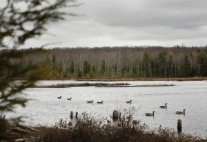 After Gov. Paul LePage withheld about $11 million in bonds for land conservation until the Legislature backed his proposal to expand logging on public lands, two groups put up $200,000 to preserve Knight's Pond and Blueberry Hill in North Yarmouth and Cumberland. A task force's opposition now makes it less likely that legislators will consent to LePage's plan. 2015 Press Herald file photo/Derek Davis