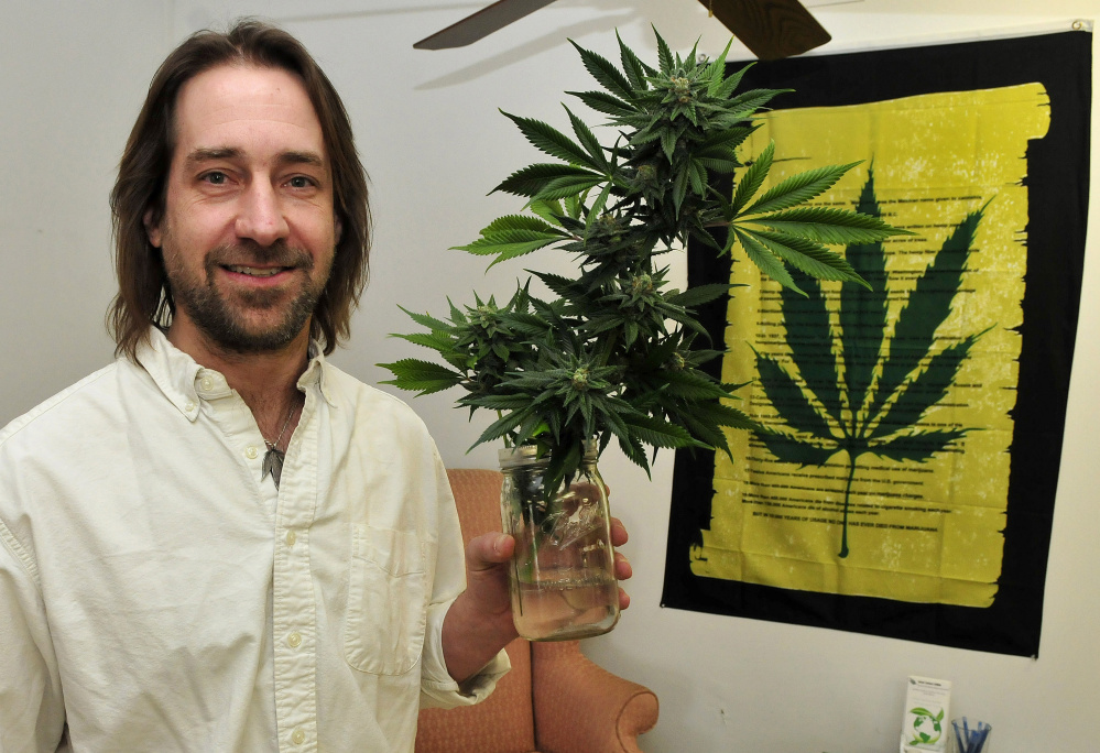 Dawson Julia, shown Thursday at his East Coast CBDs medical marijuana business in Unity, holds a section of a bud-filled marijuana plant grown there.