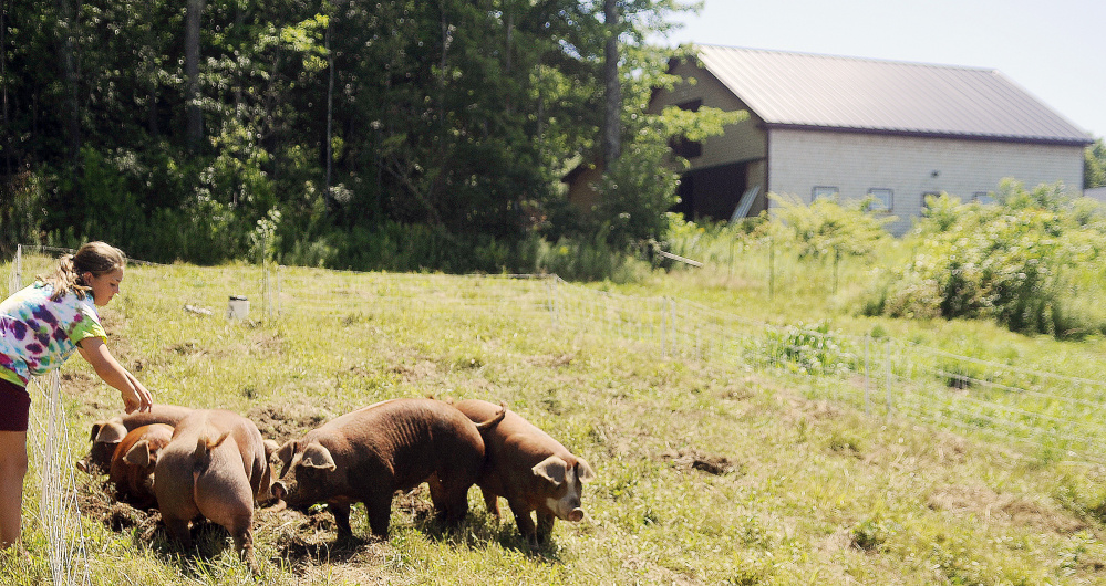 Megan Blasius, of Monmouth, plays with hogs at Cranberry Rock Farm in Winthrop during Open Farm Day on Sunday.