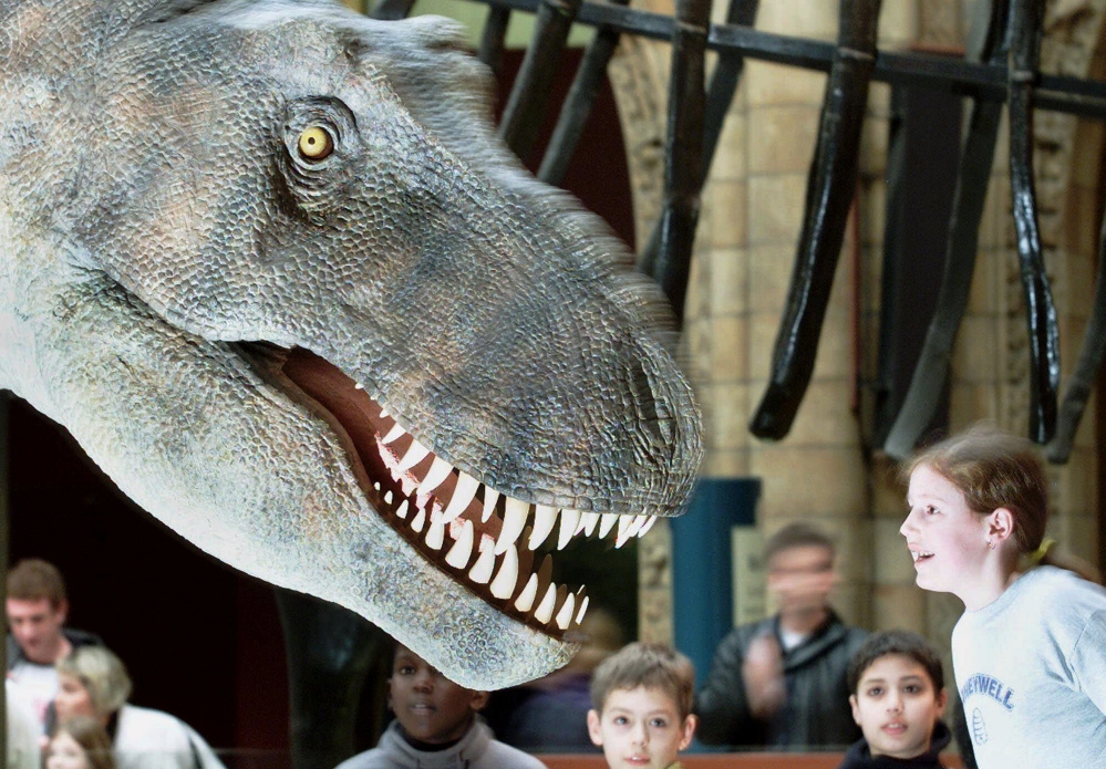 Dinosaurs like the Tyrannosaurus rex, represented in a model at the Natural History Museum in London, possibly used air sacs, as ostriches do, to make sounds, scientists say.