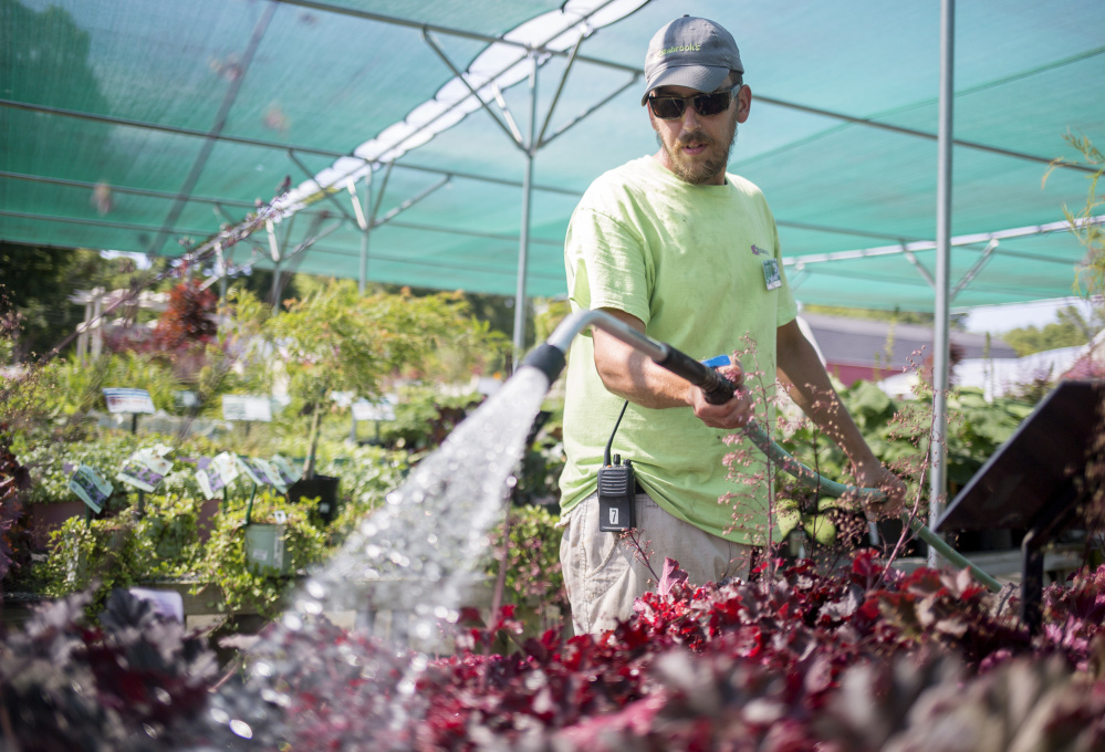 Justin Yates of Yarmouth waters plants for sale at Estabrook's garden center in Yarmouth. Dry, sunny conditions this summer have forced gardeners and farmers to water more, but the lack of heavy rain has kept crop diseases down.