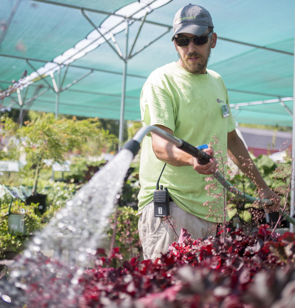 Justin Yates of Yarmouth waters plants at Estabrook's in Yarmouth. The State Drought Task Force says significant drought conditions exist.