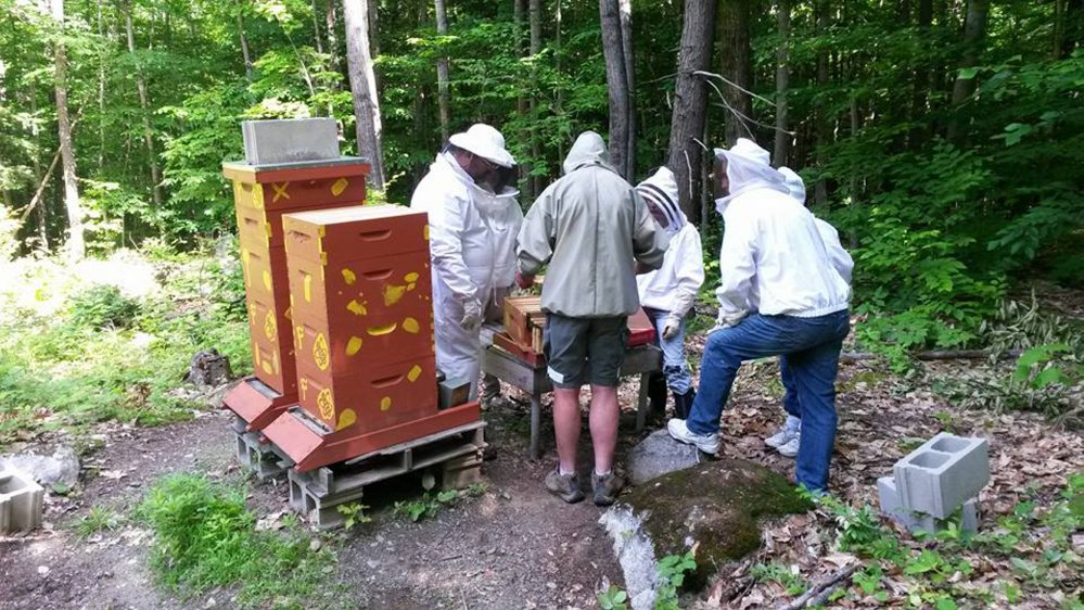 Hives receiving attention during a lesson.