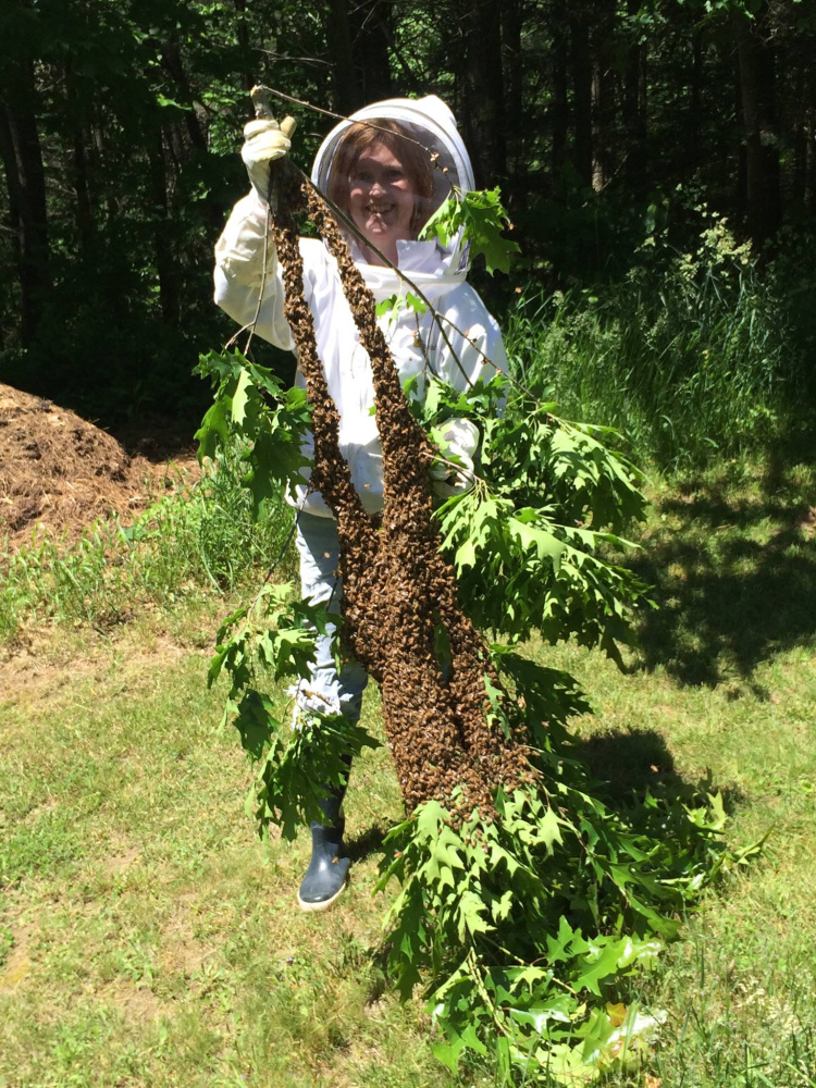 A swarm of bees about to be installed into a hive.