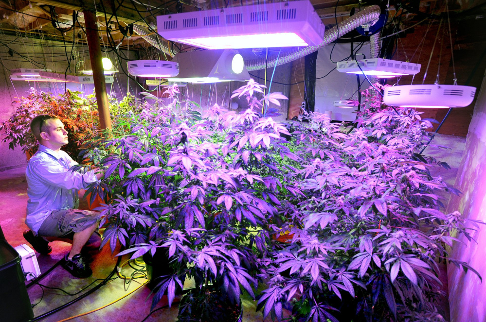 Maine already requires caregivers to grow their plants in secure enclosures away from public view and prohibits them from forming collectives where they grow plants together.