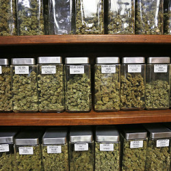 Containers display varieties of marijuana for sale at The Station, a retail and medical cannabis dispensary in Boulder, Colorado. A new report finds that marijuana is already pulling in tax revenue at three times the rate of Colorado's alcohol industry. Associated Press/Brennan Linsley