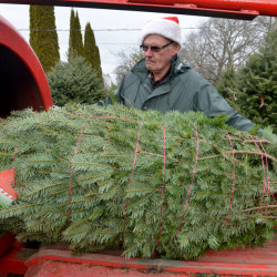 Bryant LaPlante prepares a Christmas tree for transport Saturday at The Forest, a Christmas tree farm in Cornville.