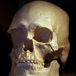 The skull of Kennewick Man, whose 9,000-year-old remains will be returned to U.S. Indian tribes for burial. Associated Press photo