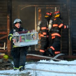 A firefighter emerges from a burning house on China Road in Winslow with a pet rabbit on Friday.