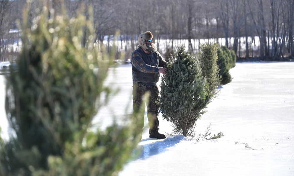 Recycled Christmas Trees Warn Of Open Water On Messalonskee Lake  - Christmas Tree Augusta Maine