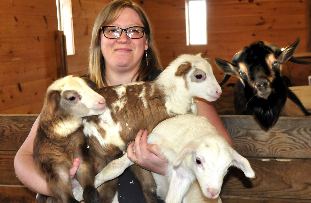 Unity College barn manager Megan Anderson on Thursday holds an armload of lambs — including two of a new set of triplets — born recently at the college. From left are lambs Mojave, Shiloh and Mammoth. At right, a goat joins the group photo.