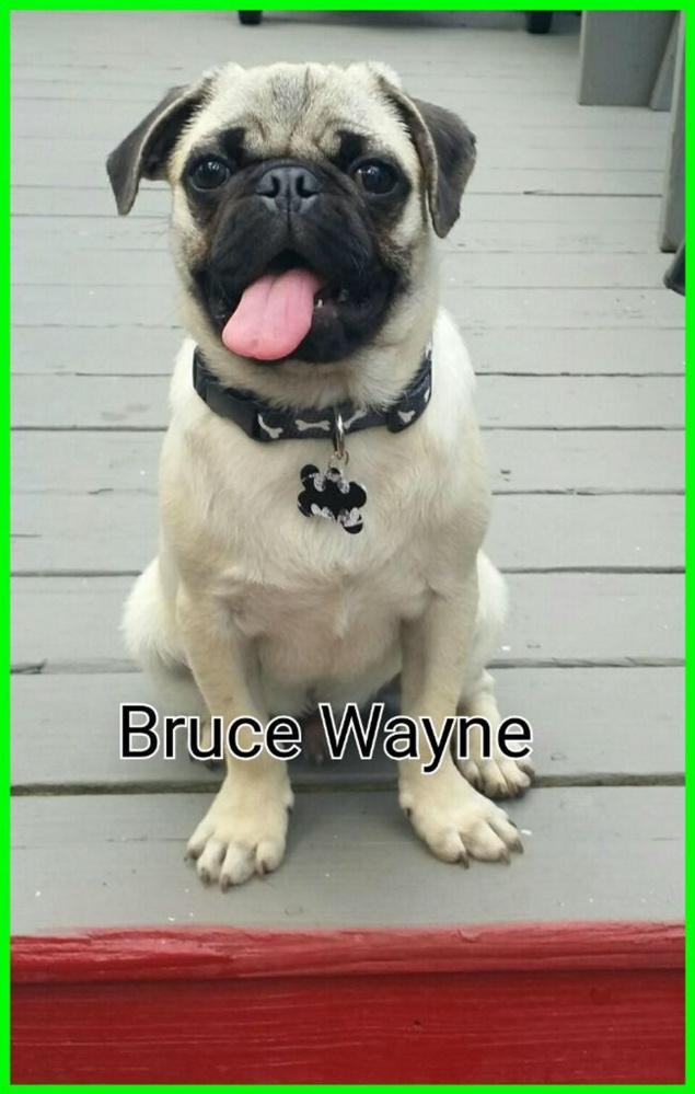 This dog, named Bruce Wayne, was bitten on neck by Dakota in January.