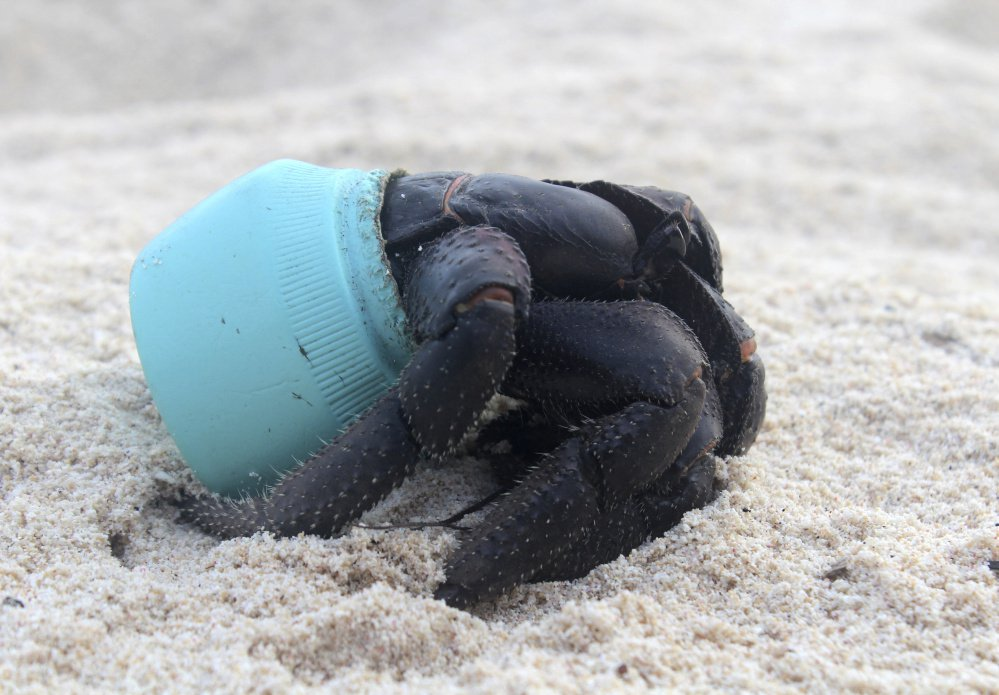 In this 2015 photo provided by Jennifer Lavers, a crab uses as shelter a piece of plastic debris on the beach on Henderson Island. When researchers traveled to the tiny, uninhabited island in the middle of the Pacific Ocean, they were astonished to find an estimated 38 million pieces of trash washed up on the beaches. (Jennifer Lavers via AP)