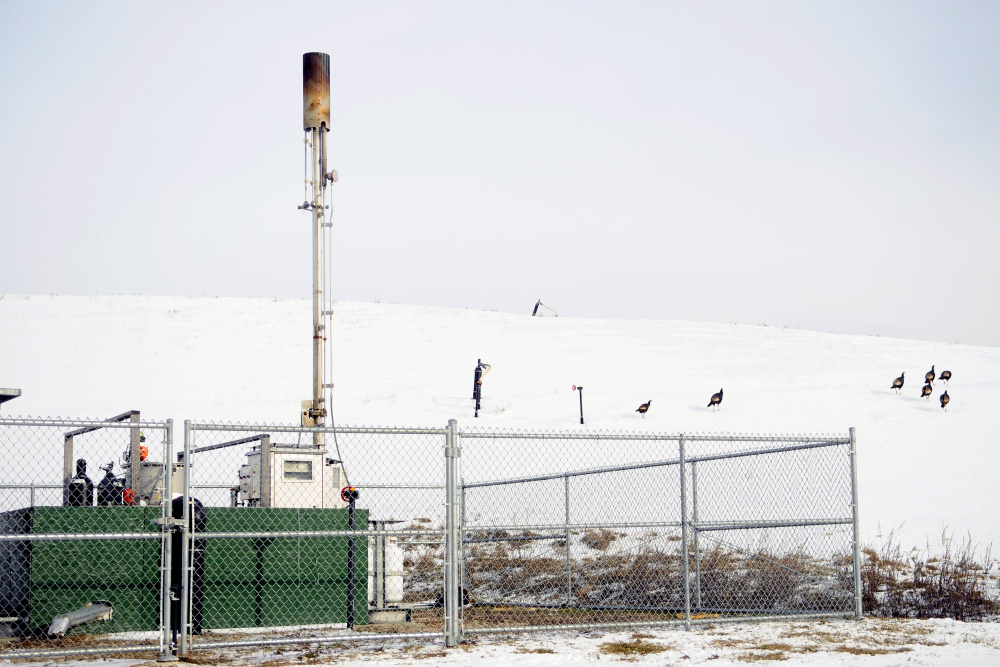 A flock of turkeys walks away from the methane flare installation on January 10, 2017, at Hatch Hill landfill in Augusta.