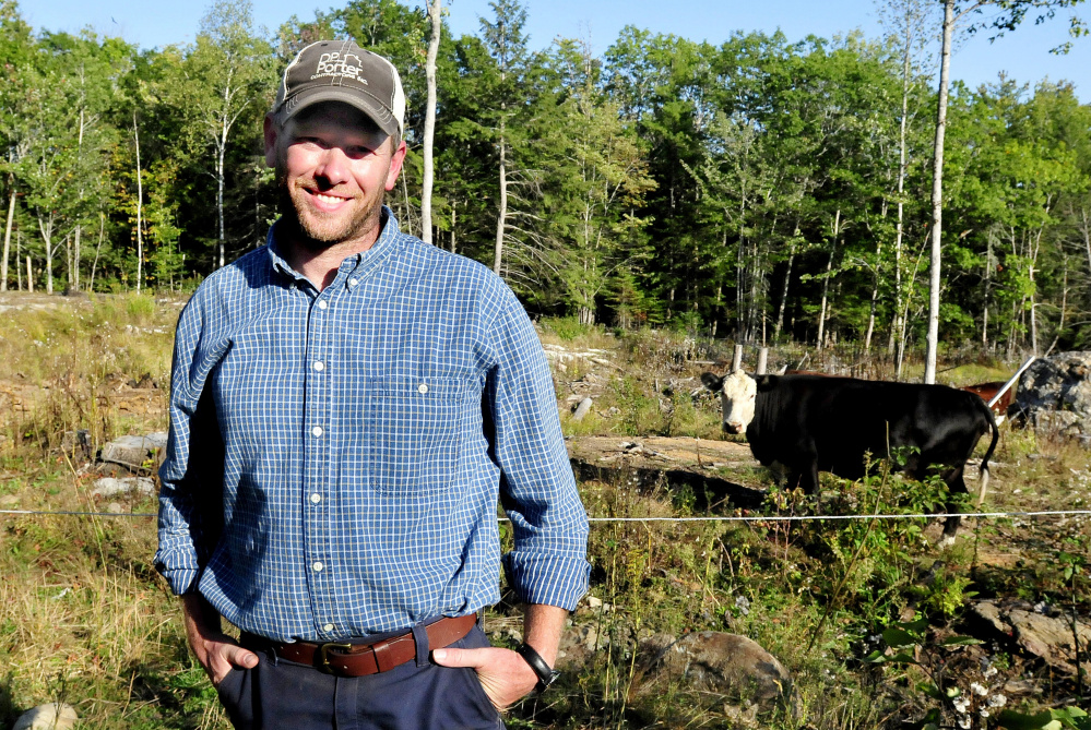 Jason Stutheit stands beside a pasture with cows and calves Wednesday at his Pond Hill Farm in Brooks. Stutheit found his Wagyu steer that had taken off a week ago from the Common Ground Country Fair site in Unity. It was grazing with a herd Wednesday night near the fairgrounds.