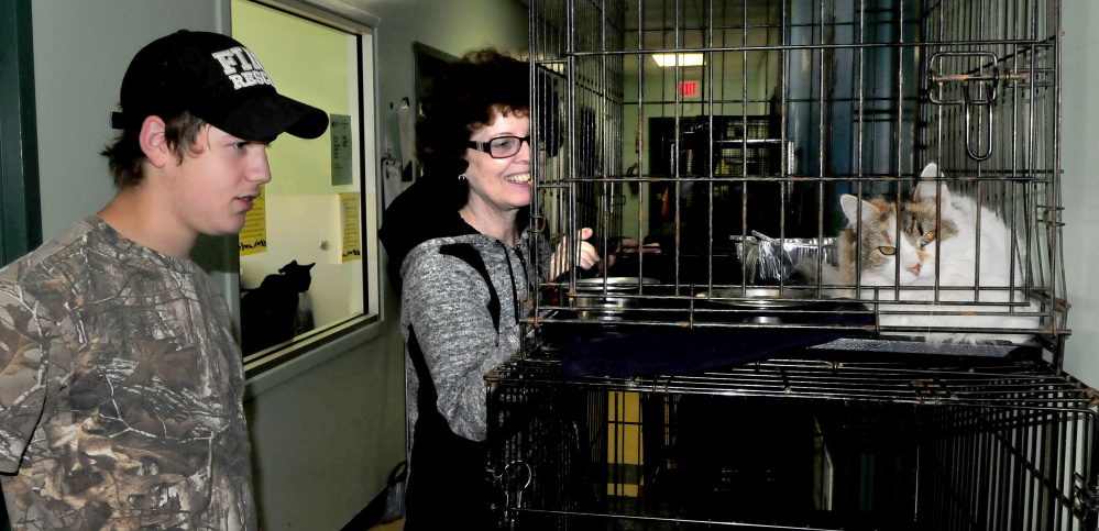 Josh Sylvester and Janet Nadeau check out some of the cats that are now available for adoption at the Humane Society Waterville Area on Monday. The shelter has re-opened after recovering from an outbreak of distemper that killed approximately three dozen cats.