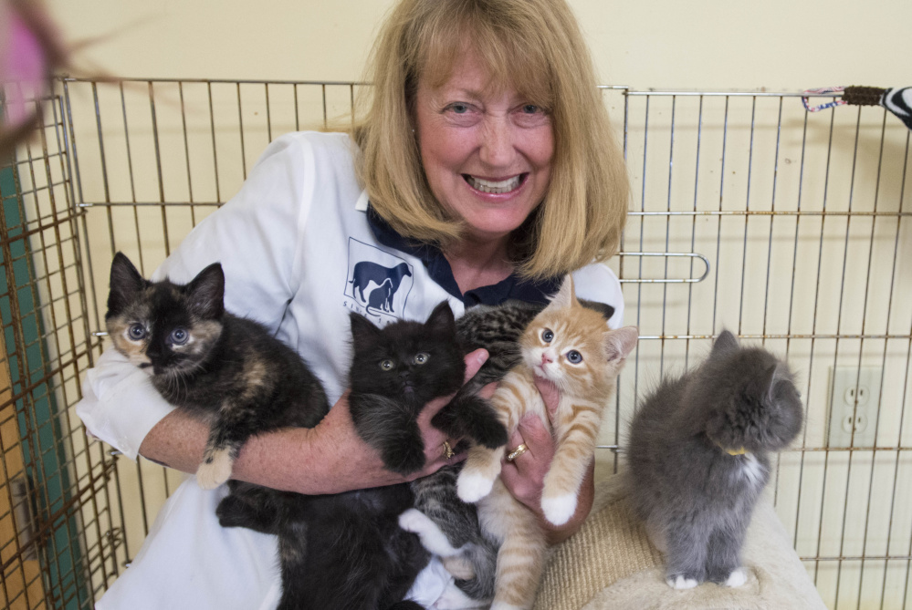 Lisa Smith, director of the Humane Society Waterville Area, holds an armload of kittens at the shelter's Webb Road location in Waterville on Aug. 15. Smith resigned as the shelter's director late Thursday.