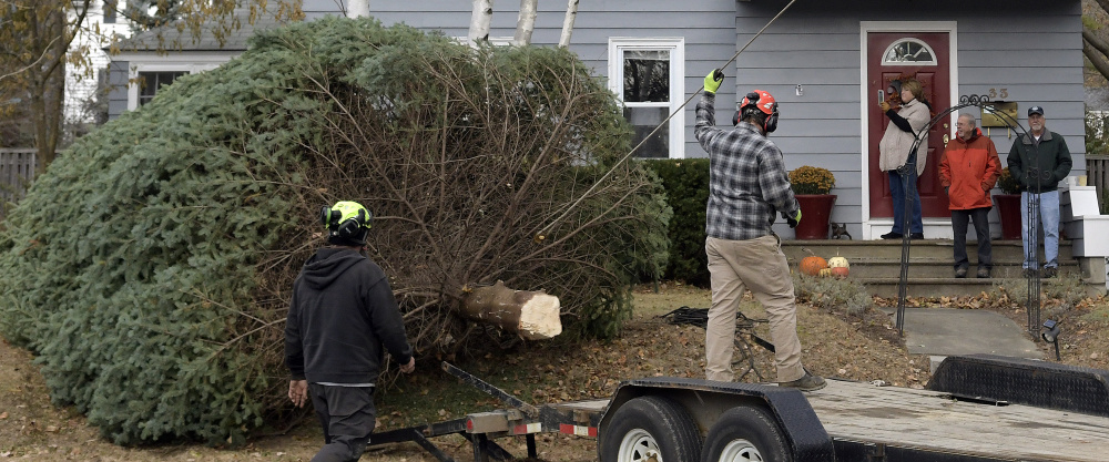 Arborists winch a spruce tree from the lawn of Augusta residents Anne and Cliff Vining, who watch Wednesday from their steps. Brownies Landscaping and Excavation felled the tree, which the couple donated to serve as a holiday tree on Water Street in Augusta. At right is Vining's brother, Don.
