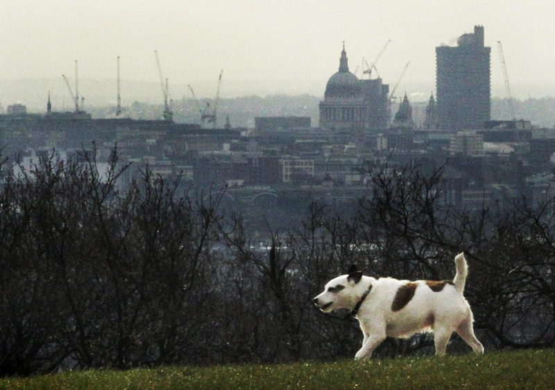 A dog takes a walk Tuesday with the central London skyline in the background. Hospital admissions and court cases involving dangerous dogs have been on the rise in Britain.